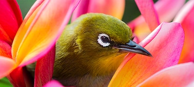 Snímek ptáka znázorňující detaily obrazu v rozlišení 4K