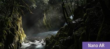 Snímek scény v lese při západu slunce s vysokým rozlišením